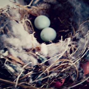Bird nest for web